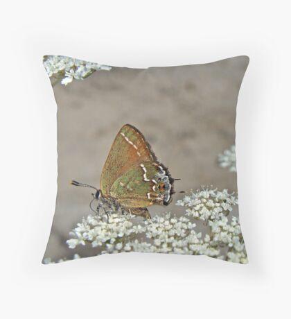 Olive Hairstreak Butterfly - Mitoura grynea - Juniper Hairstreak Throw Pillow