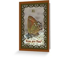 Hi Hello Greeting Card - Olive Hairstreak Butterfly Greeting Card