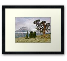 Patriarch Tree and Ribbon Cloud, Grand Teton National Park Framed Print