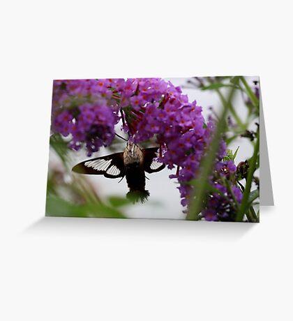 Hummingbird Moth Greeting Card