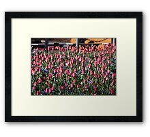 Tulips Takeover Framed Print