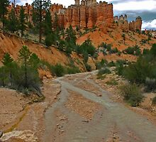 Bryce Canyon by CarolM
