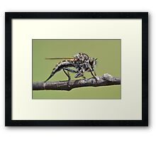 Cute and Fluffy Robber Fly Framed Print