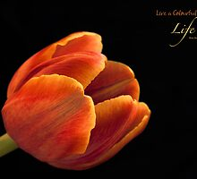 Live a Colourful Life by Kim Andelkovic