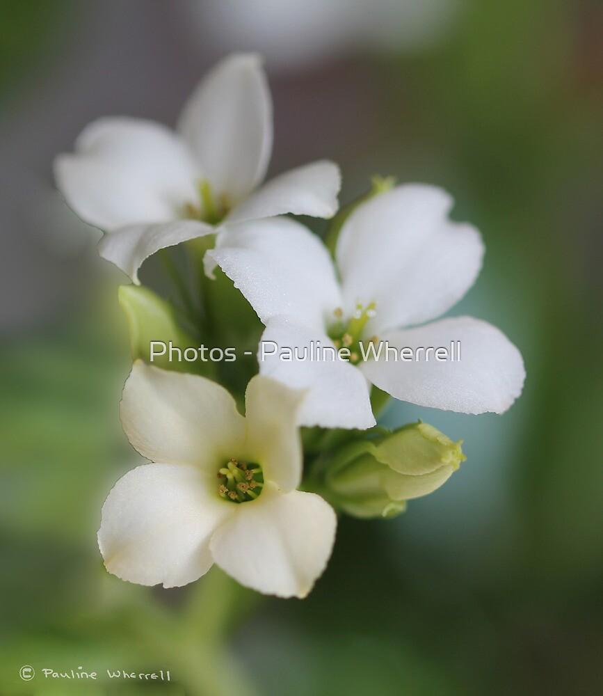 White floral by Photos - Pauline Wherrell