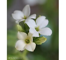 White floral Photographic Print