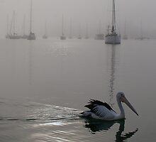 Pelican Dawn by odarkeone