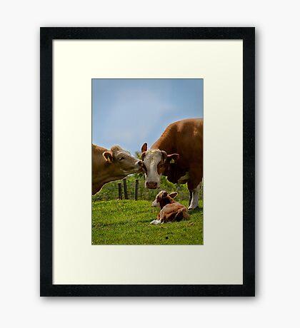 Kissin' cows Framed Print