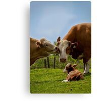 Kissin' cows Canvas Print