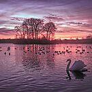 Swan Loch Sunset by David Alexander Elder