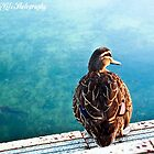 Lone Duck-y by KBG-Photography