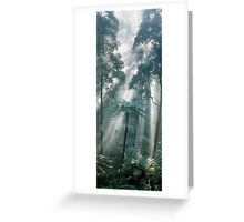 Forest Light II Greeting Card