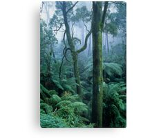 Winter morning on Mount Dandenong Canvas Print