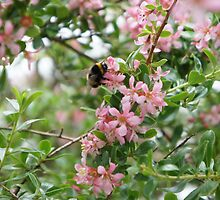 Bumble Bee by Catherine O'Hagan