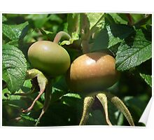 Nature's Bounty Poster