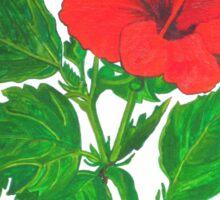 Aloha Red Hibiscus Greetings Sticker