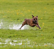Cookie in a Splash by Mark Cooper