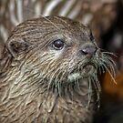 Otter by David Alexander Elder