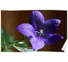 Purple Bell Flower Poster