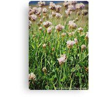 Flowers at Lands End Canvas Print