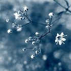 Baby's breath_01 by ciriva
