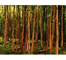 too much trees. Photographic Print
