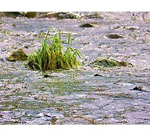 river. Photographic Print