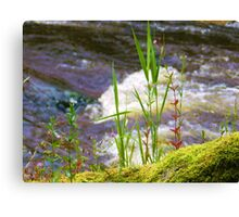 side river Canvas Print