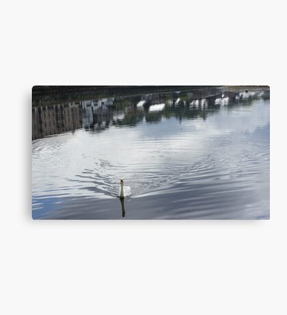 Swan, at Donegal, Ramelton IRELAND Canvas Print