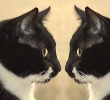 Seeing Double by Tim Bell