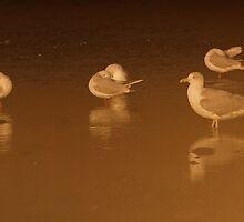 Roosting Gulls by Neil Bygrave (NATURELENS)