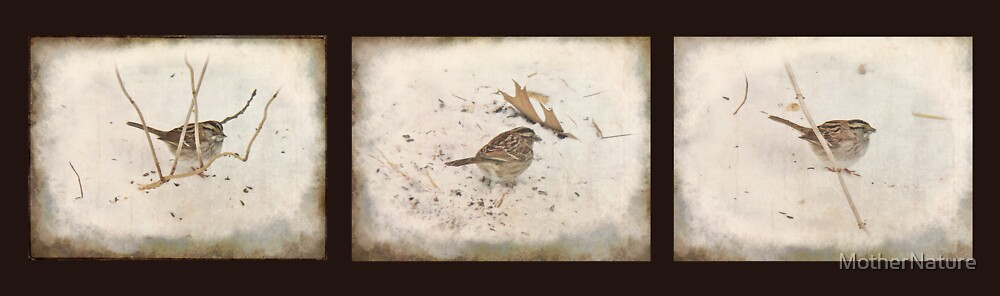 Winter and the Sparrow by MotherNature