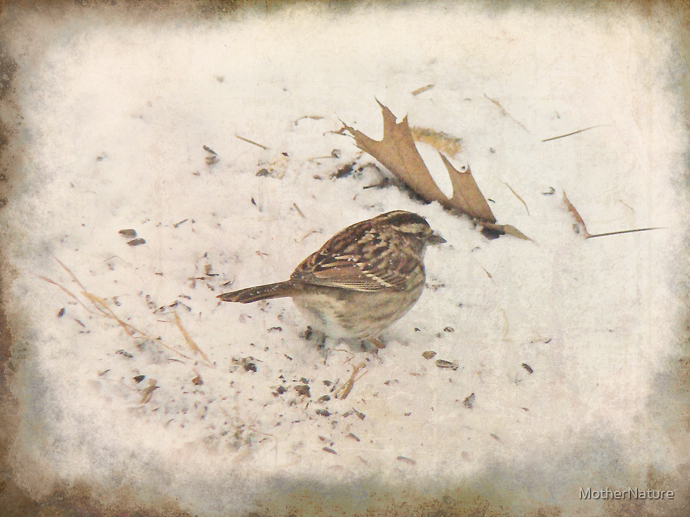 Winter and the Sparrow #1 by MotherNature