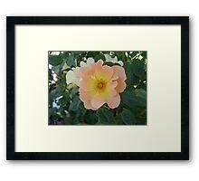 ONE PRETTY MONTANA ROSE Framed Print