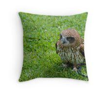 Kaya - Boobook Owl Throw Pillow