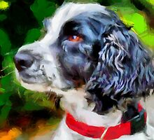 Tango - An English Cocker Spaniel by doggylips