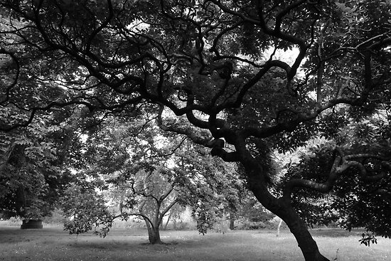 Amongst the Magnolia Trees BW by Artberry