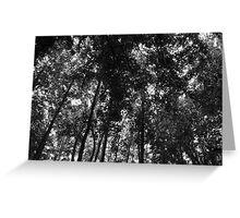 Woodland Canopy 01 BW Greeting Card