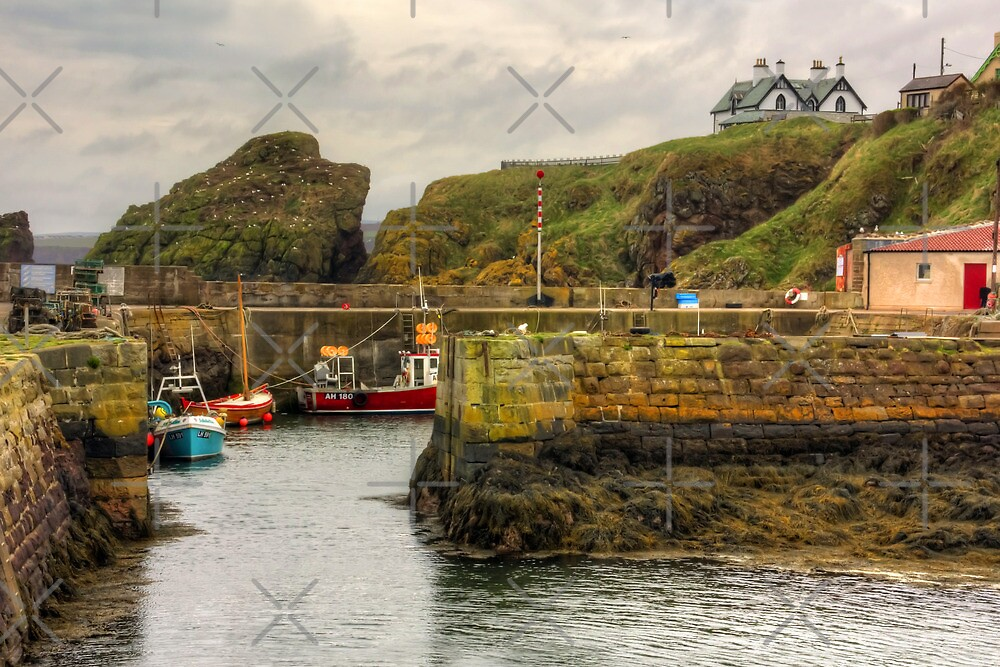 The Harbour at St Abbs by Tom Gomez