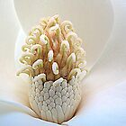 Magnolia Egg by Jean Gregory  Evans