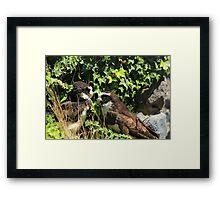 Spectacled Owls Framed Print