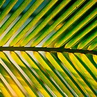Palm Leaves by cyasick