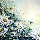 leucanthemum dawn ! by LorusMaver