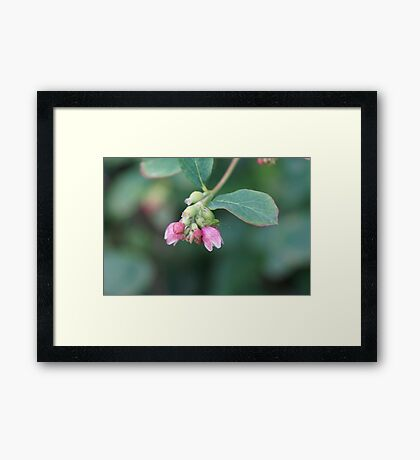 Can you see me? Framed Print