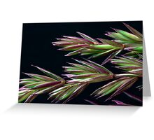 Grass Seed Macro Greeting Card