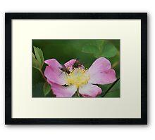 Flower Time Framed Print