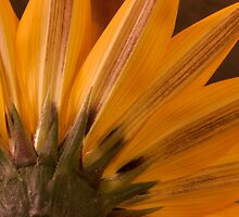 Under The Gazania Petals  by Sandra Foster