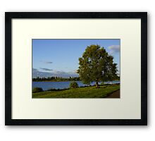 The Tree in Light Framed Print