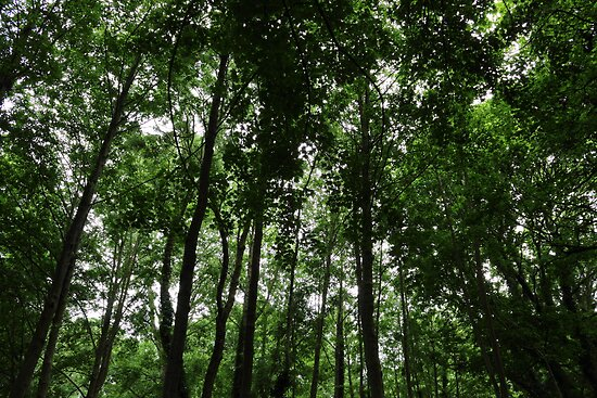 Woodland Canopy 02 by Artberry