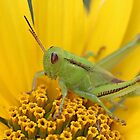 Grasshopper Green by Vickie Emms